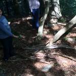 les enfants récupèrent du bois pour la cabane en séjour de vacances adaptées